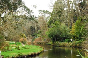 Mount Usher March 2014 (8)