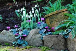 """Snowdrops in an Irish Garden"" by Paddy Tobin @ The Educational and Visitors Centre, Dublin"