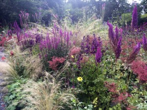 Jimi Blake: New and Exciting Herbaceous Perennials @ The Old Courthouse, Market Square, Antrim, BT41 4AW