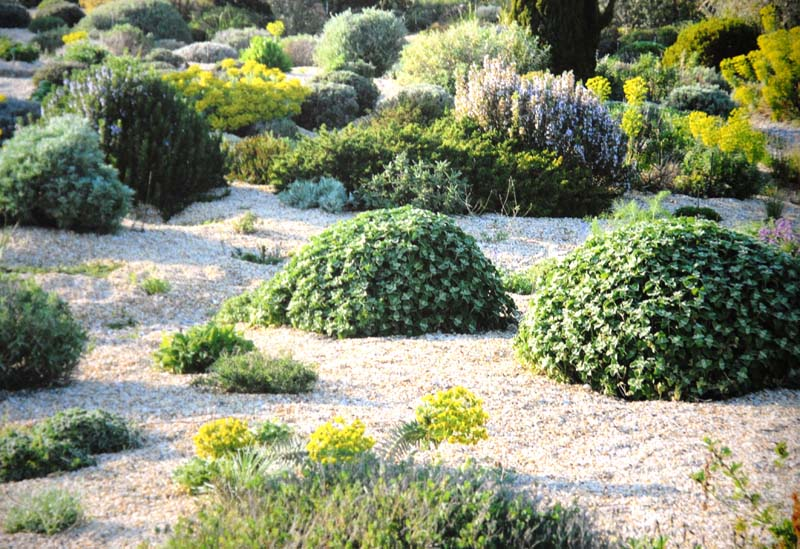 Planting Design for Dry Gardens (4) - Irish Garden Plant Society on modern planting design, drought tolerant landscape design, planting a garden,