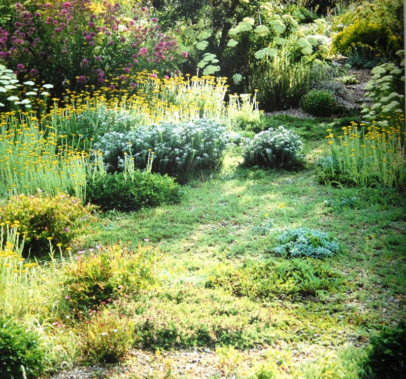 Planting Design for Dry Gardens (5) - Irish Garden Plant Society on modern planting design, drought tolerant landscape design, planting a garden,