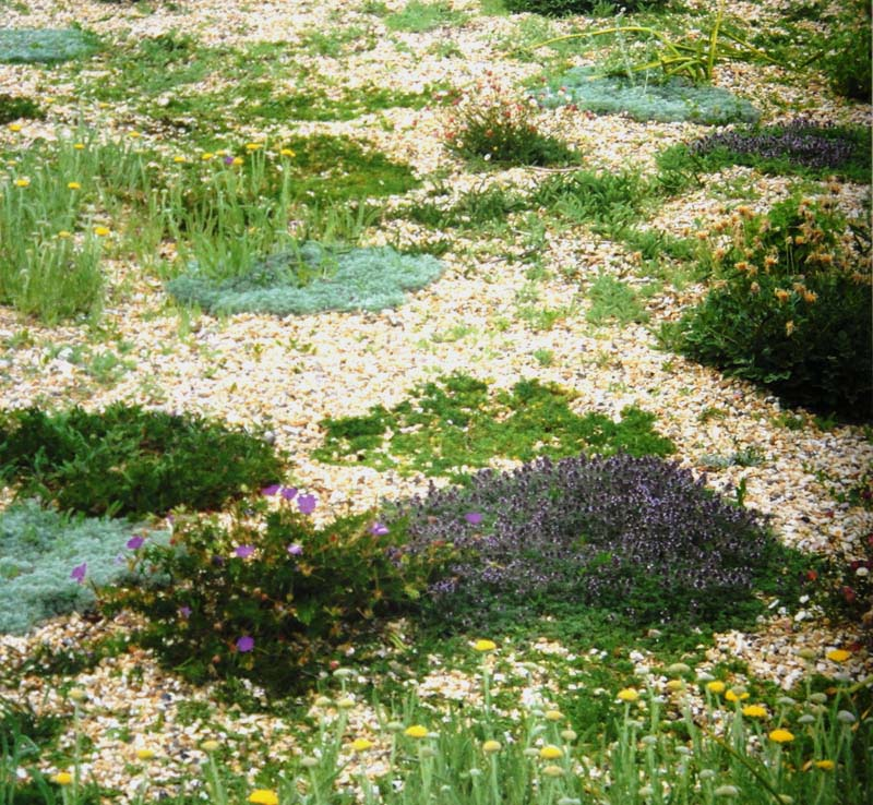 Planting Design for Dry Gardens (8) - Irish Garden Plant Society on modern planting design, drought tolerant landscape design, planting a garden,