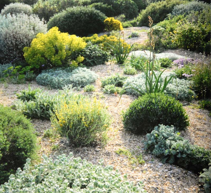 Planting Design for Dry Gardens (9) - Irish Garden Plant Society on modern planting design, drought tolerant landscape design, planting a garden,