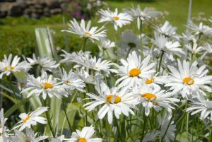 Autumn Plant Sale at Rowallane Gardens @ Rowallane Gardens,