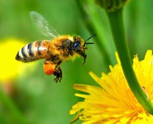 BOOKED OUT:  Planting with Bees (and Other Pollinators) in Mind @ National Botanic Gardens