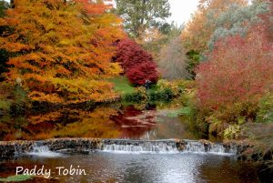 Mount Usher Walk with Seamus O'Brien @ Mount Usher Gardens,