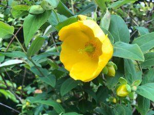 Plant Sale at Rowallane Gardens @ Rowallane Gardens